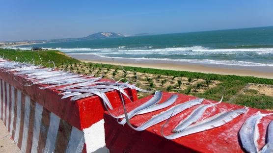 Fish drying in the sun on roadside caution barriers near Mui Ne.