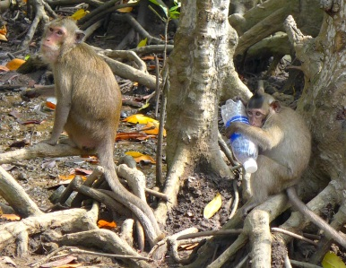 This monkey took my water bottle and wouldn't give it back. I called the local police but there was nothing to be done — the monkey was clearly quite attached to the bottle. Unfortunately, monkeys taking items from tourists has become such a ritual on Can Gio that's it's become more of a tourists-giving-monkeys-crap-they-don't-need kind of thing, which makes for a whole lot of corrupted, environmentally oblivious, junk-food addicted monkeys that are pretty adorable nonetheless.