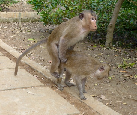 Because I couldn't not take a picture of monkeys doing it.