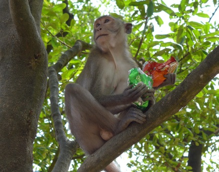 As it seemed to cling equally to both bags, it was hard to tell which chip flavor this monkey preferred — though it was clear that sharing was out of the question.